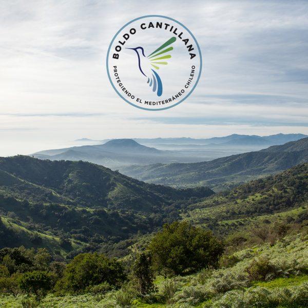 boldo-cantillana-fundacion-tierra-austral-logo-min-600x600b